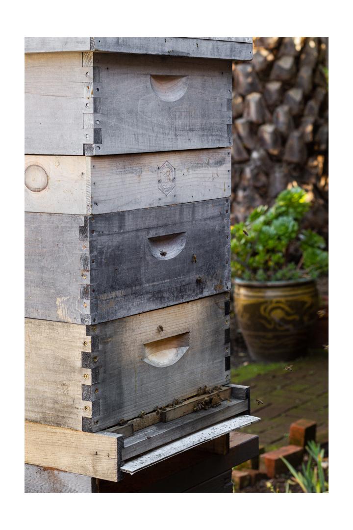 beehive, honey making, honey bees, phoode, editorial food photography