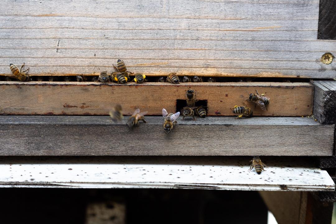 honey, beehive, honey bees, making honey, phoode, editorial food photography
