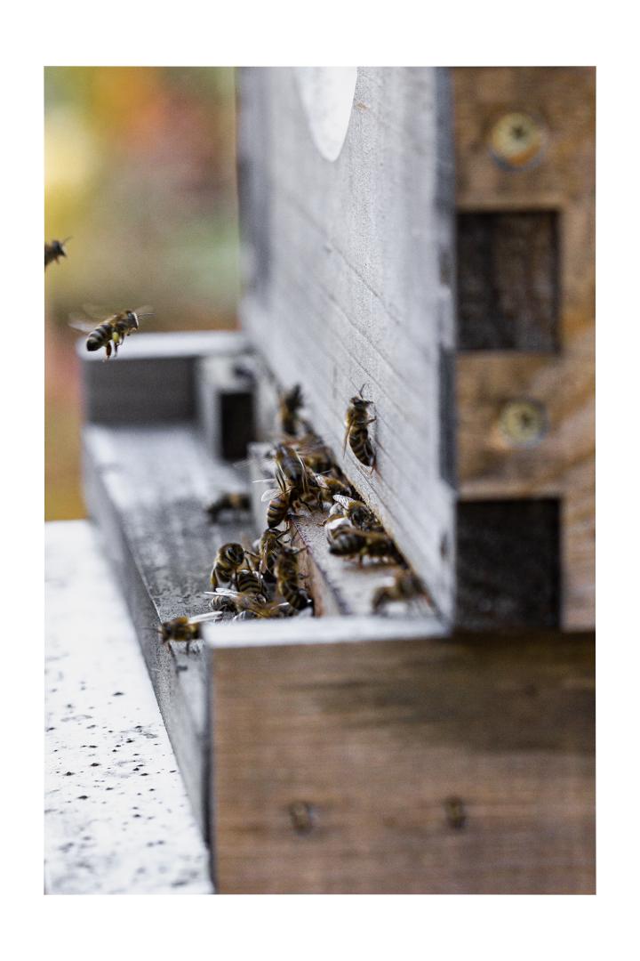 beehive, honey bees, pollen, phoode, editorial food photography