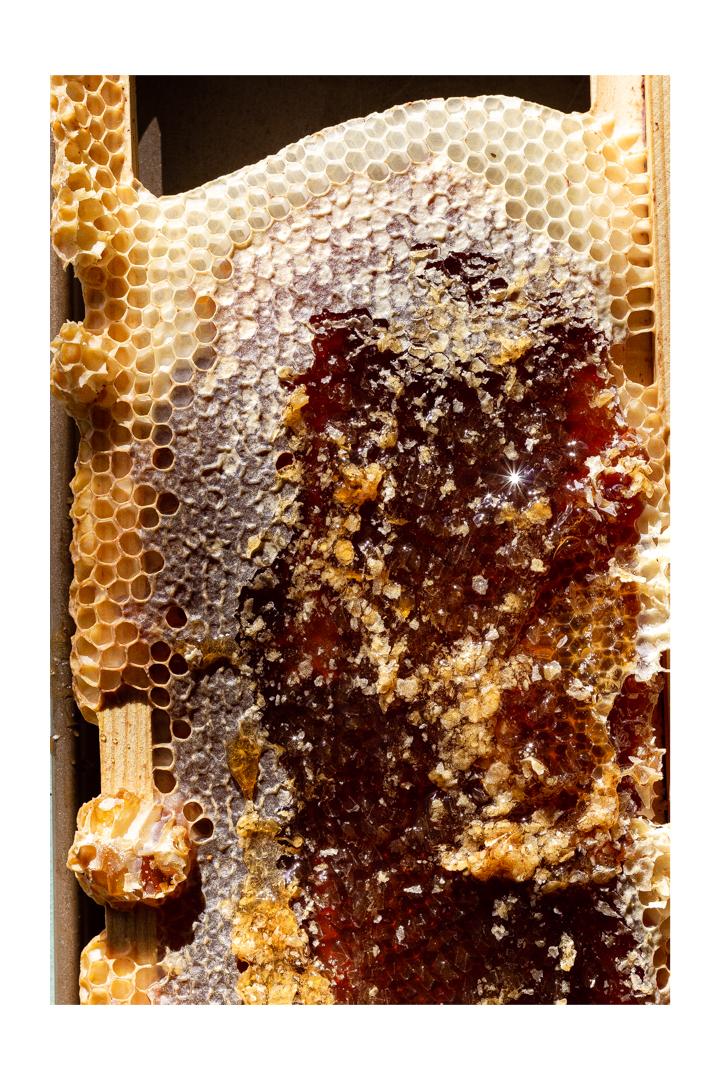 honeycombm, honey, honey making, beehive, phoode, editorial food photography