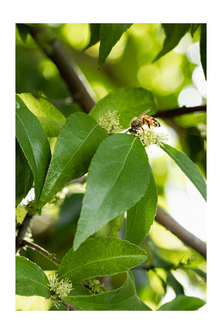 Honey Bees, bee nectar, pollen, making honey, beehive, phoode, editorial food photography